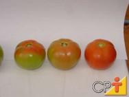 Processamento de Tomate: informações sobre o tomate
