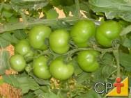 Processamento de Tomate: curiosidades
