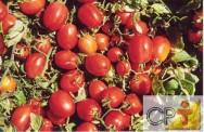 Processamento de Tomate: valor nutricional