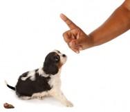 Como lidar com cães