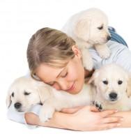 Trato dos cães - cuidados antes de atuar no ramo