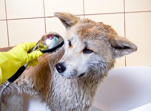 Como dar banho em cães