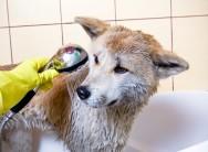 Trato dos cães - como dar o banho