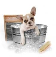 Trato dos cães - banho antipulgas