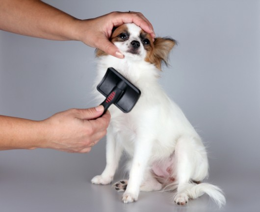 Trato dos cães - cuidados com a pelagem