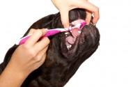 Trato dos cães - limpeza dos dentes