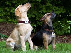 Curso Profissionalizante de Adestrador de Cães