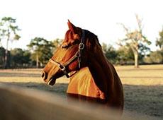 Curso CPT: Curso Profissionalizante Online de Criador de Cavalos