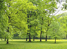 Curso Reposição Florestal
