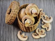 Curso Cultivo do Cogumelo Champignon