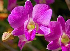 Curso CPT: Curso Online Cultivo de Orquídeas para Fins Comerciais ou Hobby