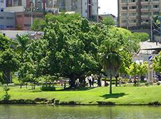 Curso Arborização Urbana