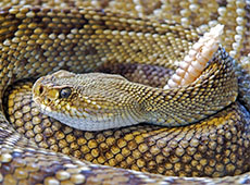 Criação de Serpentes Para Produção de Veneno