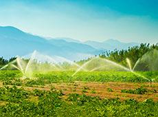 Irrigação em Frutíferas
