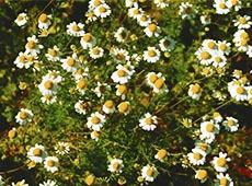 Curso Uso de Plantas Medicinais em Dermatologia