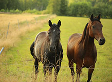 Curso Alimentação de Cavalos