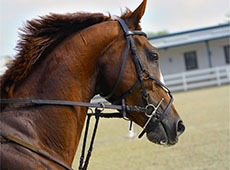 Curso Online Aparação de Cascos, Correção de Aprumos e Ferrageamento de Cavalos
