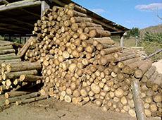 Uso da Madeira de Eucalipto na Fazenda