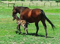 Curso Reprodução de Cavalos