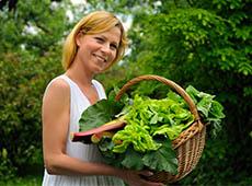 Curso Cultivo Orgânico de Hortaliças em Estufa