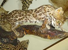 Curso Taxidermia - Empalhamento de Aves e Mamíferos