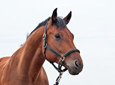 Curso CPT: Curso Online Como Comprar Cavalos