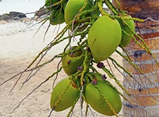 Curso Cultivo Orgânico de Coco