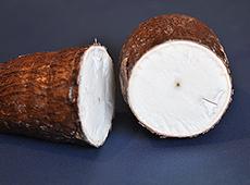 Processamento de Mandioca - Polvilho Azedo, Fécula, Farinha e Raspa