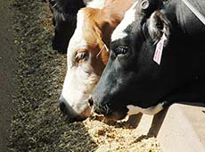 Curso Cana Ureia - Alimento de Baixo Custo para Bovinos