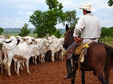 Manejo Racional de Gado para Vaqueiro