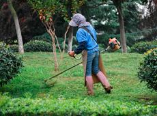 Curso Treinamento de Jardineiro