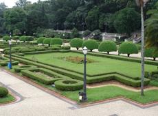 Curso de Topiaria e Mosaicultura - Esculturas Vivas com Plantas