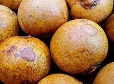 Curso Cultivo e Processamento de Coco Macaúba para Produção de Biodiesel