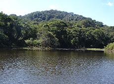 Curso CPT: Curso Online Restauração Florestal em Áreas de Preservação Permanente e Reserva Legal
