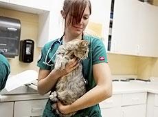 Curso Primeiros Socorros para Cães e Gatos - Parada Respiratória e Cardíaca, Desmaios, Estado de Choque e Convulsões