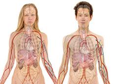 Capacitação de Atendente de Farmácia e Drogaria: Anatomia Humana e Farmacologia
