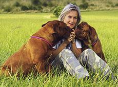 Curso Como Cuidar e Educar o Seu Cão