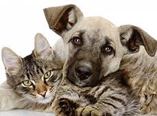 Curso Hotel para Cães e Gatos
