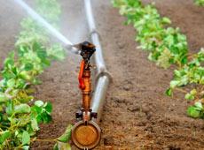 Projeto de Irrigação Localizada