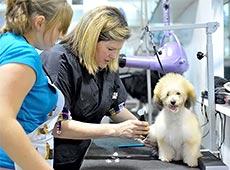 Curso Capacitação de Auxiliar Veterinário - Cães e Gatos