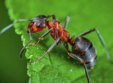 Controle de Formigas Cortadeiras
