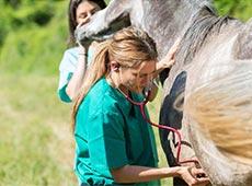 Capacitação de Auxiliar Veterinário - Equinos e Bovinos