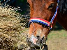 Alimentação de Equinos