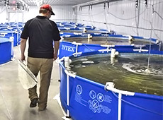 Cultivo de Peixes em Sistemas de Recirculação de Água - RAS