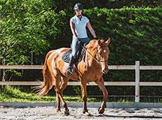 Curso Montagem de um Centro de Equiterapia, Seleção e Treinamento de Cavalos Terapeutas