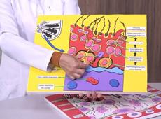 Fisiologia Veterinária Sistemática
