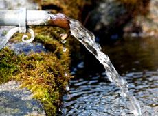 Saneamento e Zoonoses em Medicina Veterinária