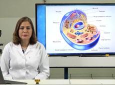 Fisiologia Veterinária Funcional