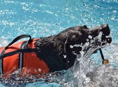 Fisioterapia e Reabilitação Animal