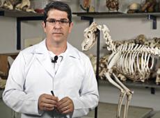 Anatomia Veterinária: Osteologia e Miologia de Animais Domésticos